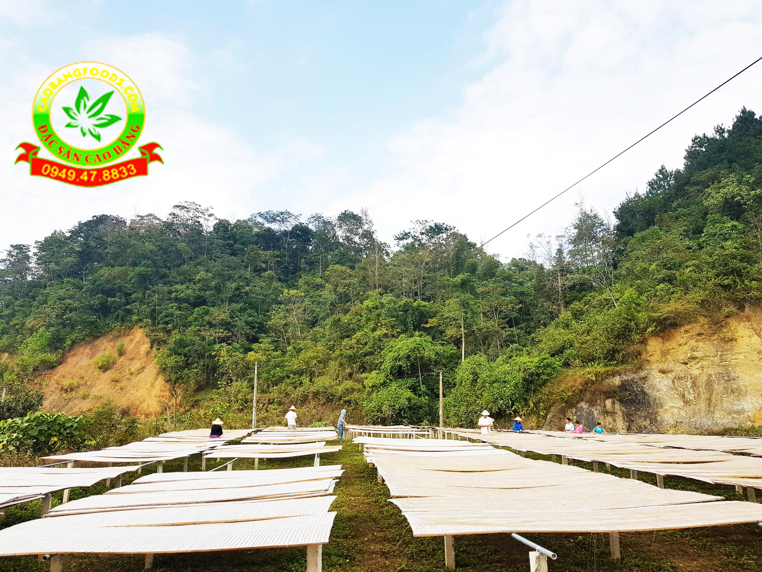 Video về quy trình sản xuất miến dong tại Cao Bằng